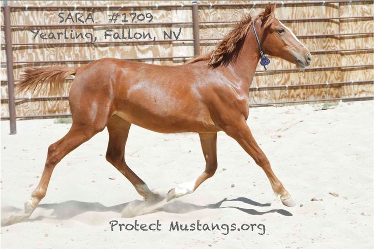 Help get wild horses to safety!
