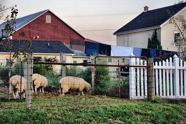 813 best images about amish the simple life on pinterest for Country farm simples