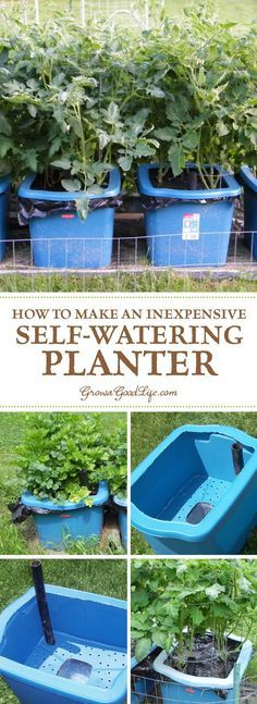 Many versions of self watering containers, also known as self watering grow boxes, self watering pots, and self watering planters are sold online, but you can make them yourself for a fraction of the cost out of some easy to find items.