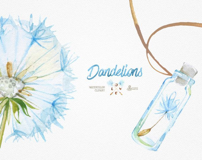 Dandelions. 14 Watercolor Clipart blowballs floral by OctopusArtis