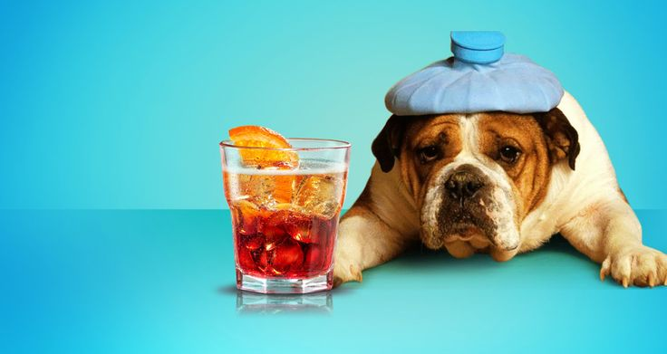 10 Hair of the Dog Cocktails to Kill a Hangover