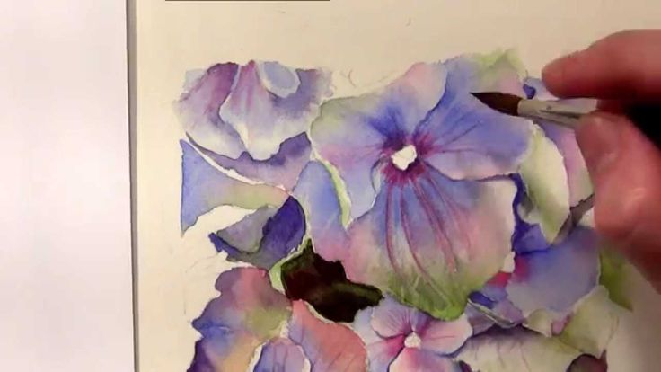 How to paint hydrangeas in watercolor - Online Tutorial and Watercolor DVD