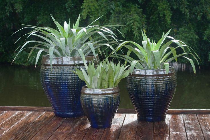 Planted Pottery | Pamela Crawford
