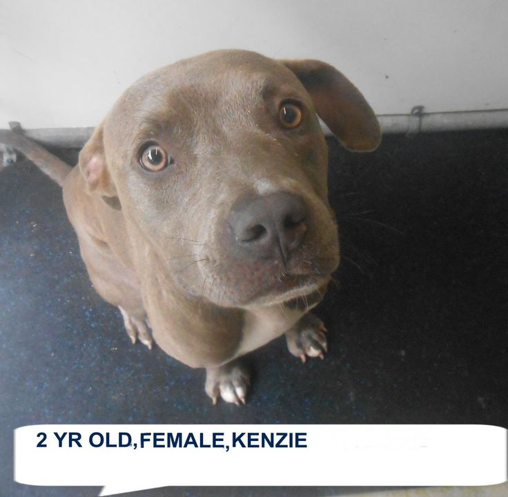 Buy more time http://www.ashelterfriend.org/Pages/default.aspx  KENZIE located in Elizabethtown, NC has 2 days Left to Live. Adopt him now!