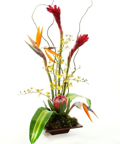 Paradise | Ginger, Birds of Paradise, Oncidium Orchids, Protea, Massageana leaves, Curly Willow