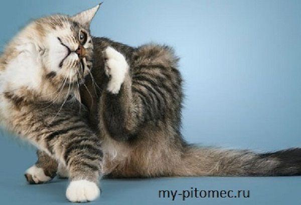 Как избавить кошку или собаку от блох