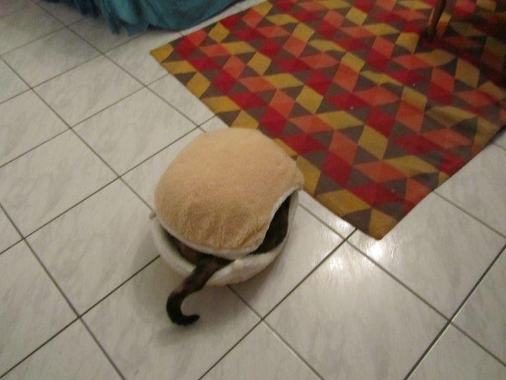 Cat burger 5