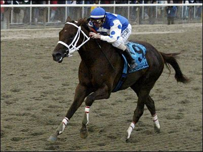 Learn about the 10 most famous racehorses. Check out the best jockeys with this famous racehorse countdown on HowStuffWorks.