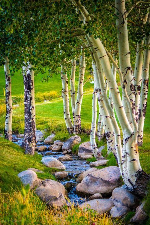 Beaver Creek, Colorado photo via portwood