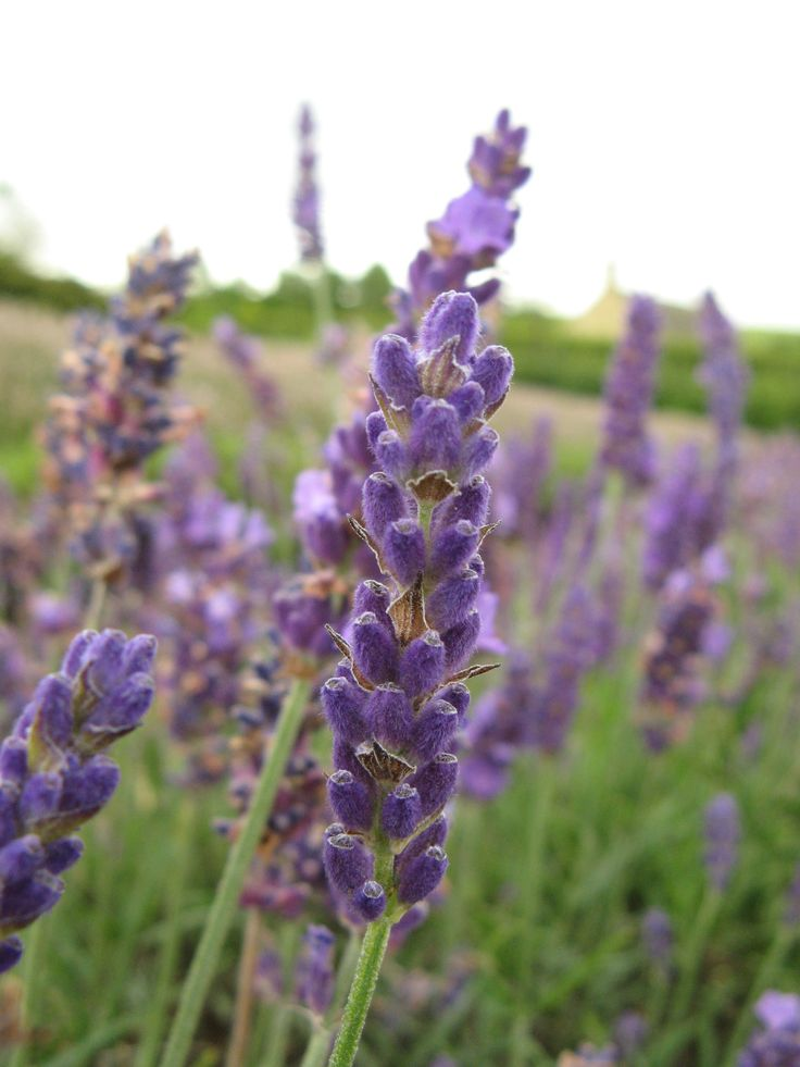 http://www.herbgeek.com/herbs-for-depression-eight-herbalists-share-strategies/