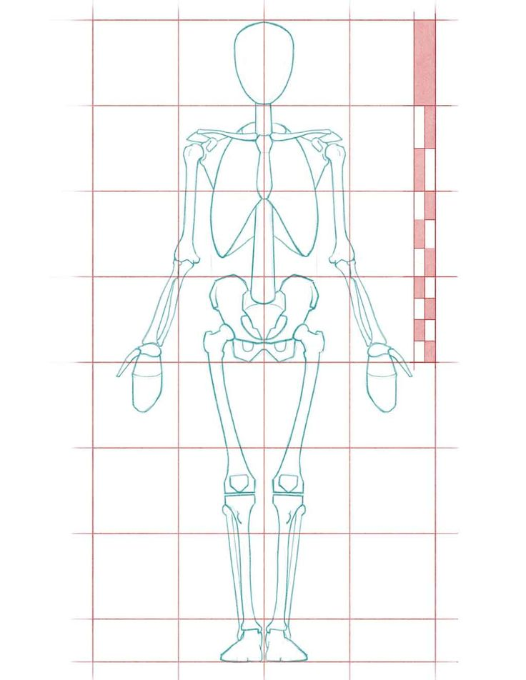 Tutorial Human Anatomy proportions for Figure Drawing. Focusing on the proportions of the skeleton rather than the less accurate fleshy landmarks.