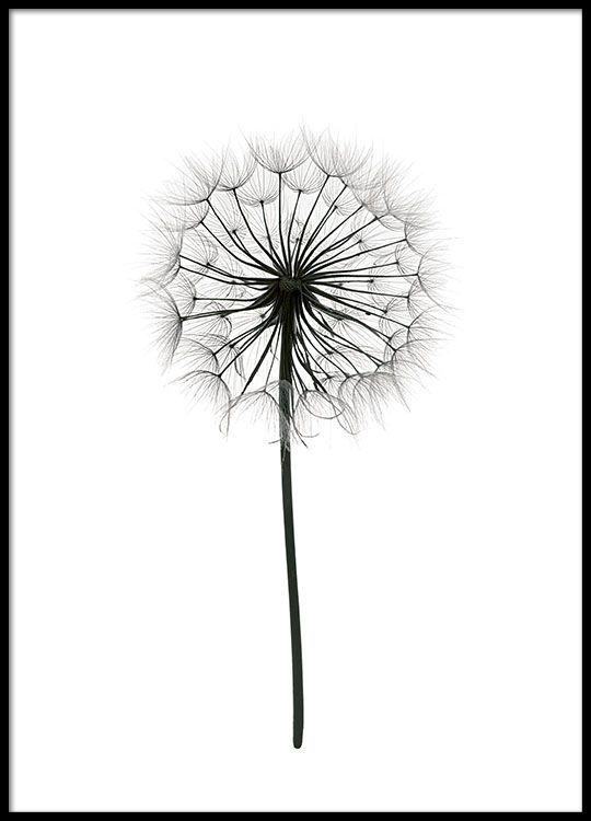 Poster with black and white photograph of a dandelion.