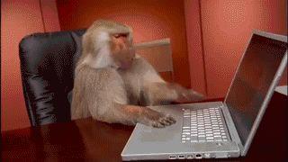 számítógépes majom dolgozó gépelés laptop