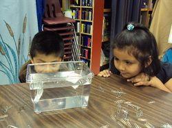 Kindergarten + Inquiry-Based Learning