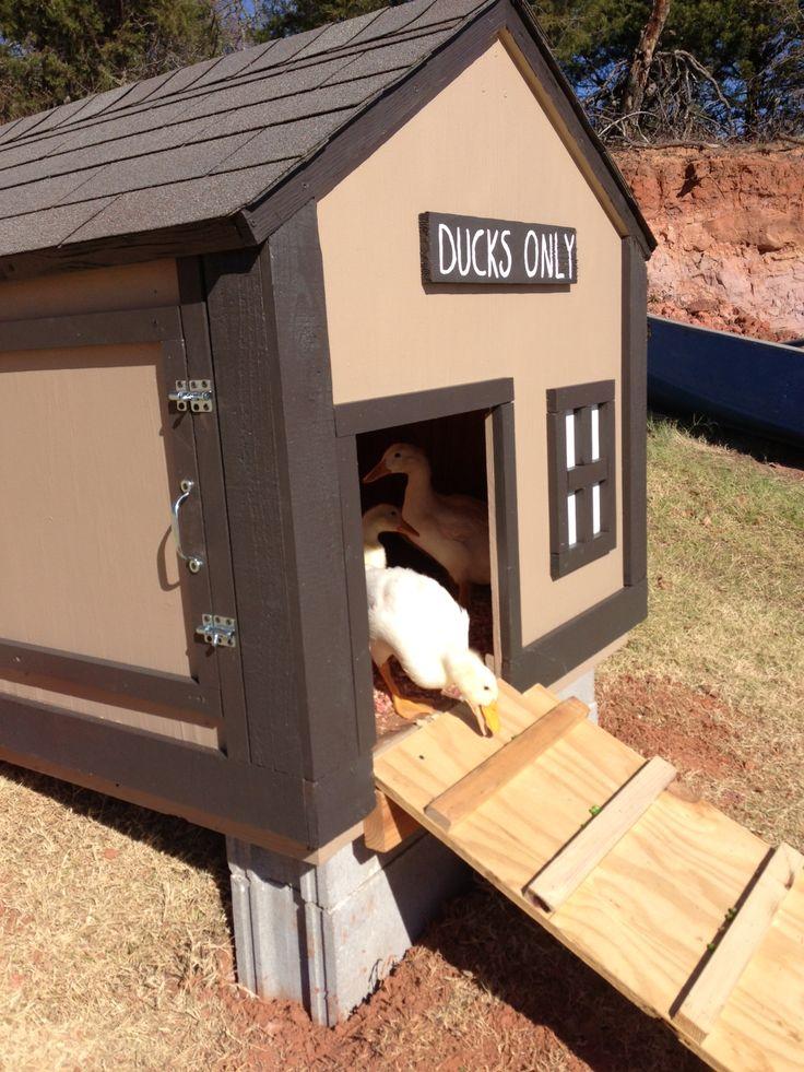 Duck house. I like the hinged side wall.