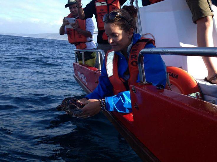 volunteer world international - marine projects