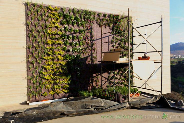 Mejores 82 im genes de muros verdes en morelia m xico for Paisajismo vertical