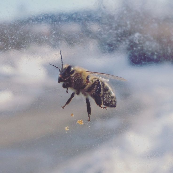 I was lucky to capture this! :D #bee #dof #photography