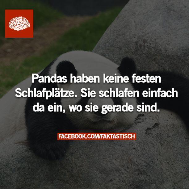 Folgt Faktastisch.tumblr.com für neue Fakten!