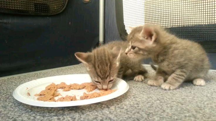 Little kitten dont know how to eat dhttpsvreddit
