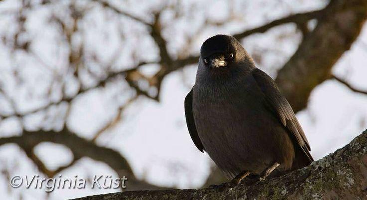 Träffade en liten linslus i jakt på vinterbilder :) #photography #fotografi #birds