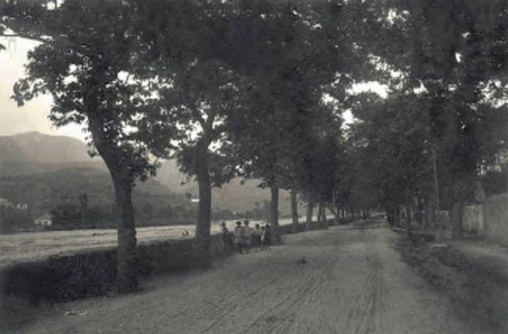 """Οδός Δενδρακίων στην Καλαμάτα, οδός περιπάτου καθώς ιστορούσαν οι παλιοί.  Πρόκειται για τη σημερινή οδό Σπάρτης, η οποία τότε ήταν φυτεμένη αρχικά με πεύκα και στη συνέχεια με πλατάνια. Διακρίνεται μια ομάδα παιδιών και ο μαντρότοιχος της (διευθετημένης) κοίτης του Νέδοντα.   [Φωτό από το λεύκωμα των ΓΑΚ Αν. Μηλίτση-Νίκα, Χρ. Θεοφιλοπούλου-Στεφανούρη """"Καλαμάτα 1830-1940, Οδοιπορικό σε πλατείες και δρόμους της πόλης"""" σελ. 69]"""