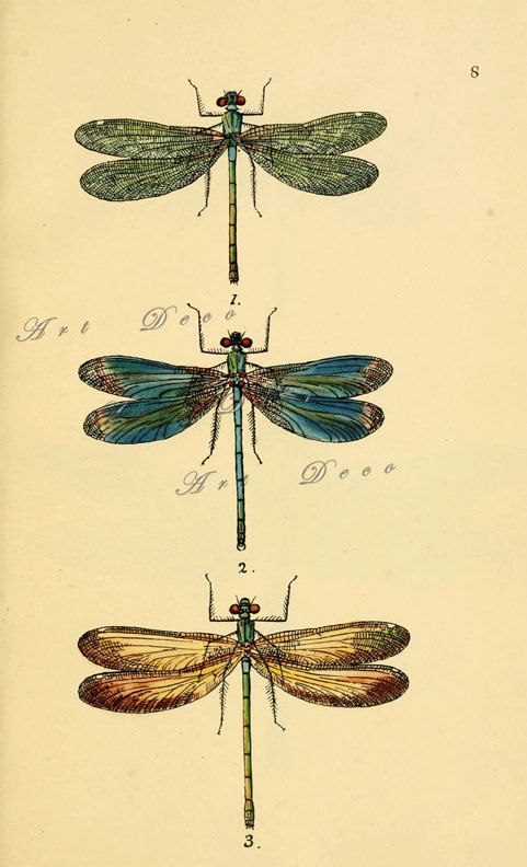 Dragonflies...Antique Scientific Illustration..Digital by artdeco, $4.00