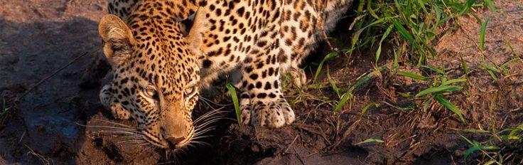 Sabi Sabi Private Game Reserve | Wildlife photography tips
