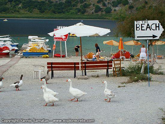 ducks at kournas lake
