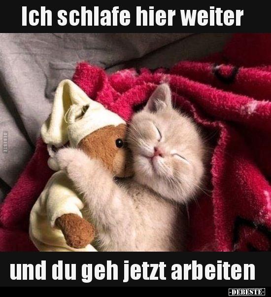 Ich schlafe hier und du gehst jetzt zur Arbeit.   – Tiere