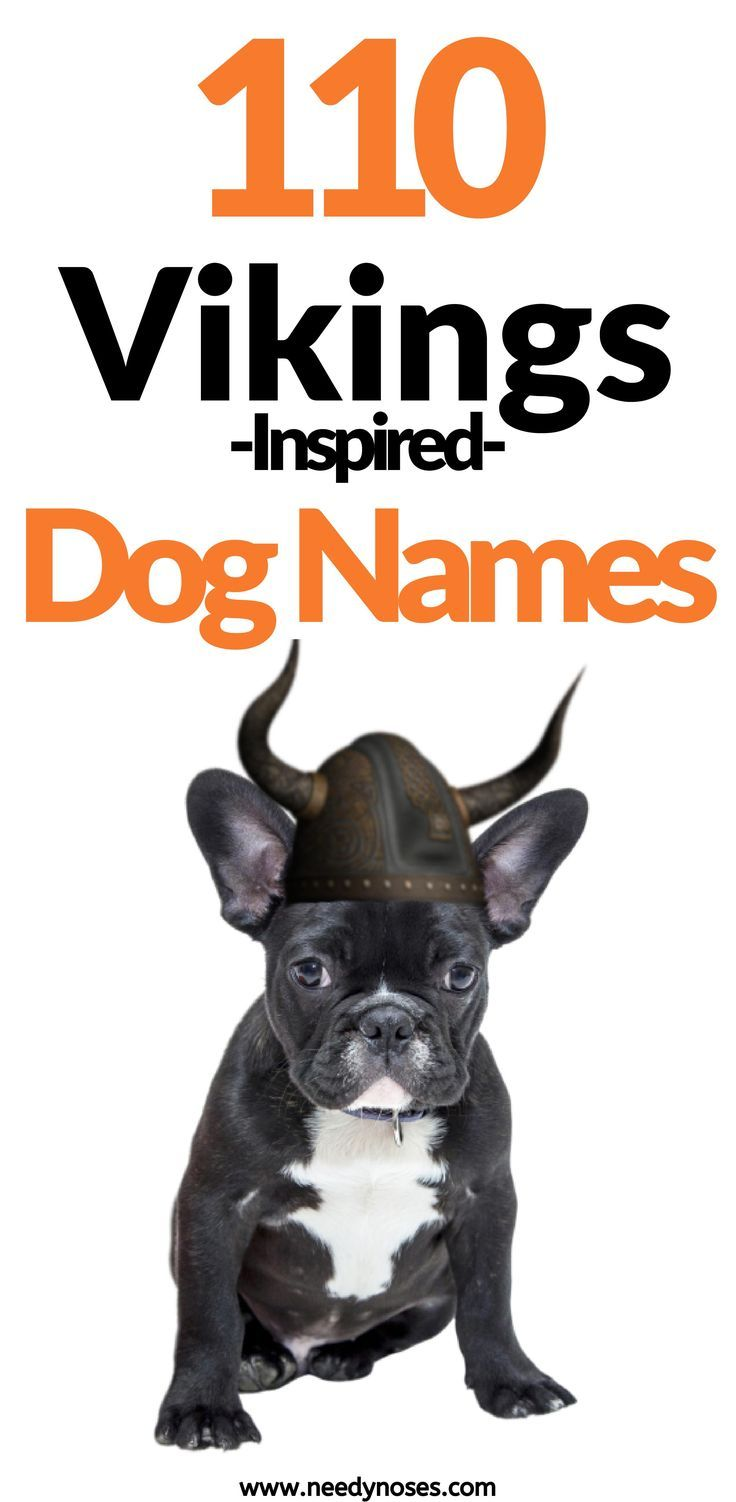 110 Vikings Inspired Dog Name Ideas In 2020 Dog Names Tough Dog