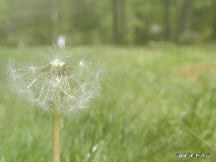 I don't care what other people think. Dandelions are really pretty.