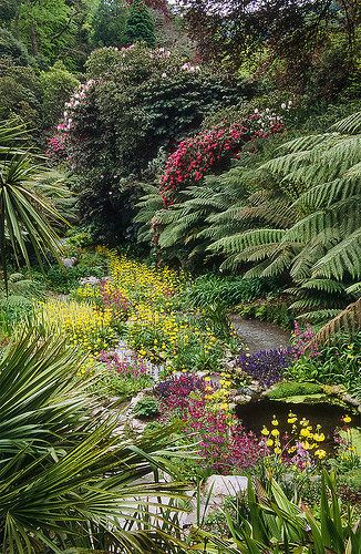 Trebah Gardens in Cornwall, England: Candelabra Primula, Ajuga, Rhododendrons, Dicksonia, Gunnera, Hydrangea, etc.