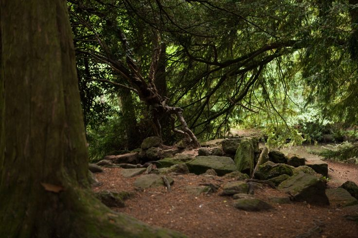 The beautiful woods at Elvaston Castle are perfect for playing hide and seek and chasing the dog, after stopping to feed the ducks. A brilliant Derbyshire day out. Photo by Beverleyperkinsphotographer.co.uk