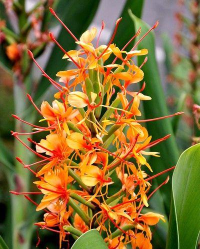 1000 id es sur le th me plantes ornementales sur pinterest for Belle plante exterieur