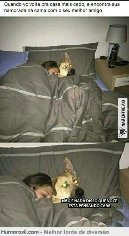 best friend cão #engracado