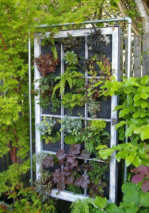 jardín vertical en marco de la ventana de la vendimia http://www.finecraftguild.com/5-vertical-vegetable-garden-ideas/
