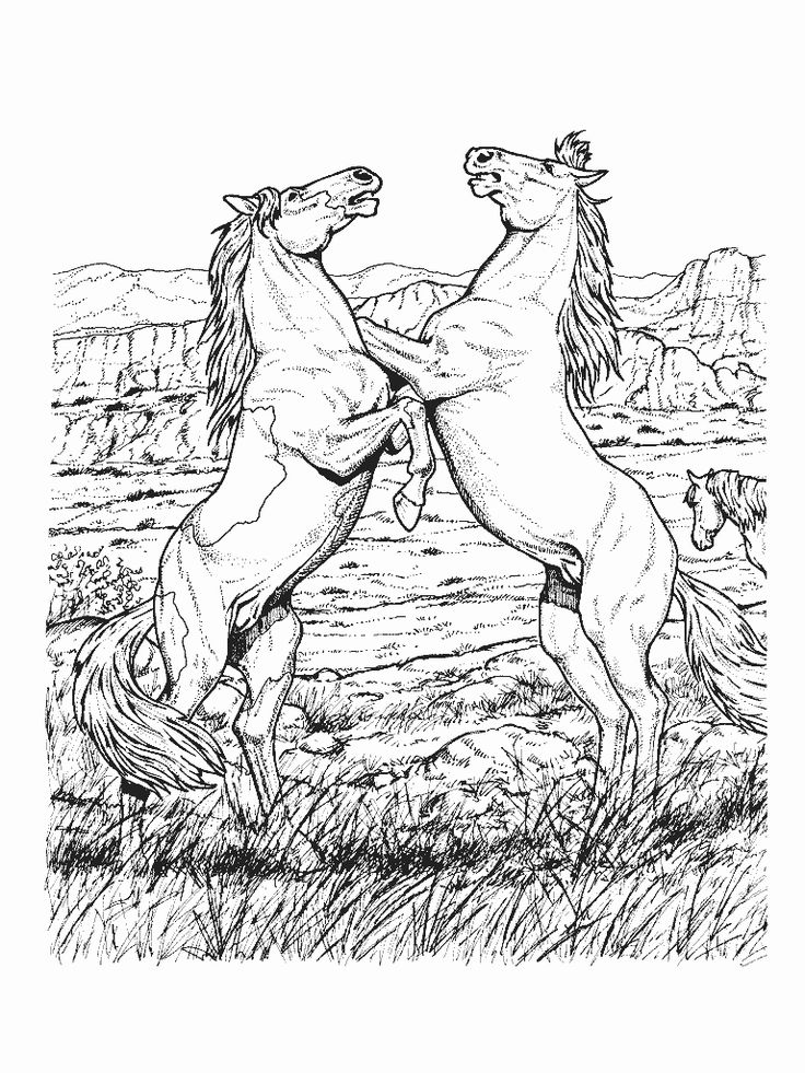 Free Realistic Animal Coloring Pages Printable Horse For KidsColor