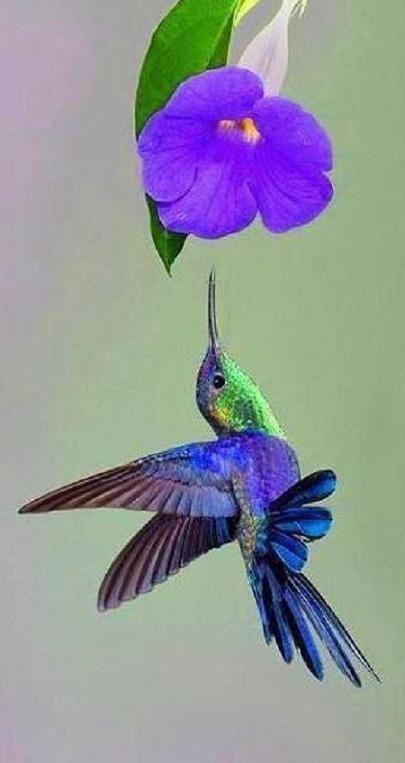 Blue flower and hummingbird... via Pixdaus