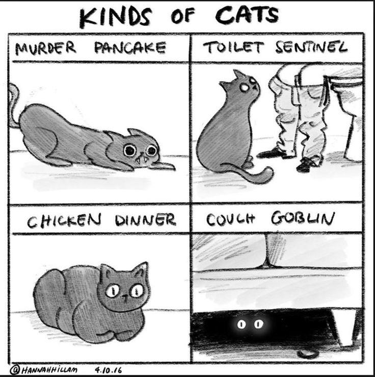 Cute Cat Comics – 33 Pics