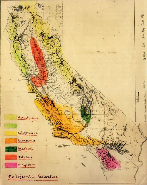 Grizzly Bear Subspecies Map In California Early Century Even In The Bay Area