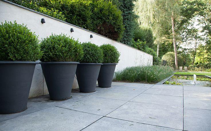 Lange witte 200+cm hoge gestuukte muur met opbouwverlichting van Royal Botania. Onder ieder verlichtingsarmatuur staan zwart geschilderde oversized aardewerk potten met Buxusbollen. De grote 100/100cm betonnen terrastegels lopen door richting de overige terrassen.