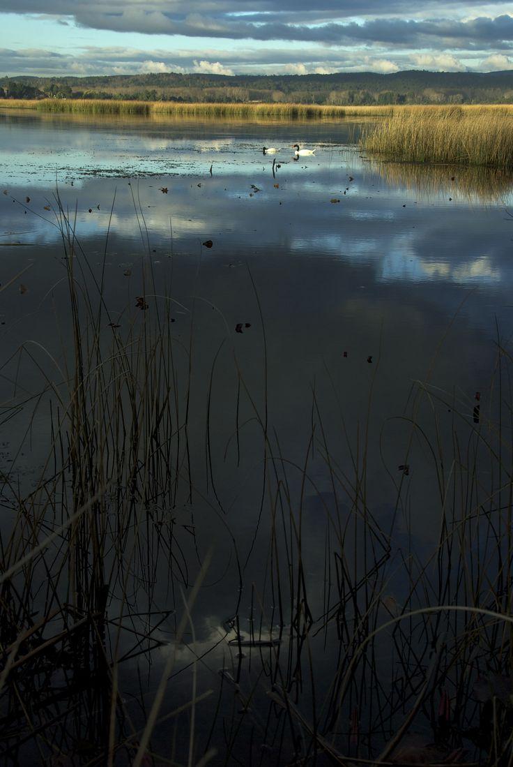 https://flic.kr/p/ooWv5y | Nubes en el humedal | Santuario de la Naturaleza, Humedal Carlos Anwandter, Sitio Ramsar 222, Punucapa