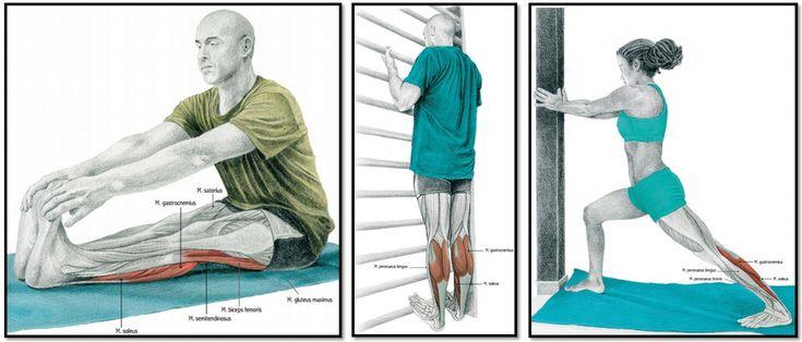 Мышечная группа ноги: ягодицы (вращение бедра лежа на полу, приведение бедра стоя, сгибание и внутреннее вращение бедра).