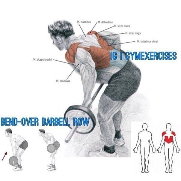 10 best images about Men's Fitness (Exercises for back ...