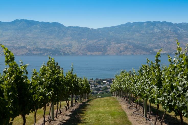 Westside Wine Trail in West Kelowna, Okanagan Valley, BC. Overlooking Okanagan Lake. -- Curated by: Ultimate Social Club | #4 1900 46th avenue | 2505494418