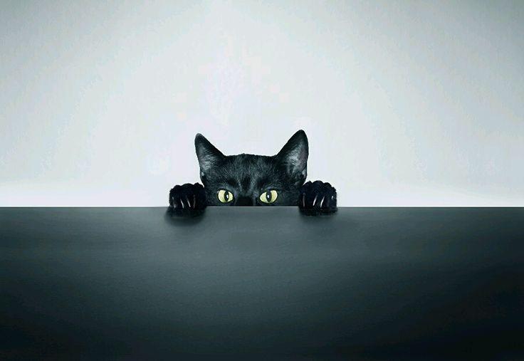 Louxo's Enjoyables : Photo