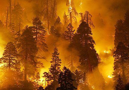 Pengertian Kebakaran Hutan