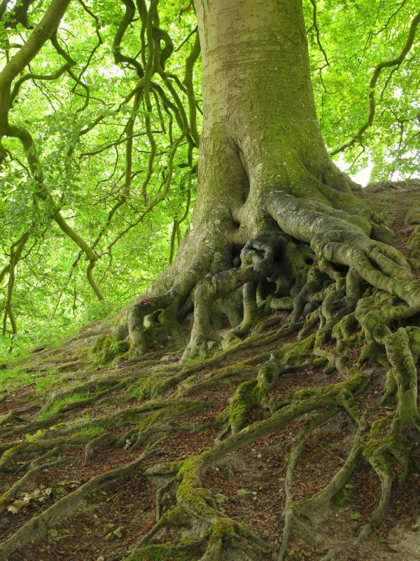 Avebury - Tolkien trees (Avebury, United Kingdom) - Travellerspoint Travel Photography