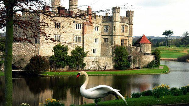 Swan before Leeds Castle